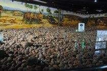 Dinosaur Egg Collection
